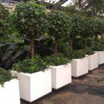 hire-plants-3